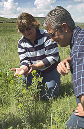 Bonnie Davis, Washington County Weed Superintendent and Roger Batt, IWAC, inspect a Leafy Spurge plant.